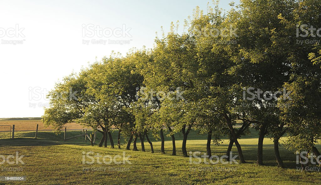 Manitoba farmland orchard royalty-free stock photo