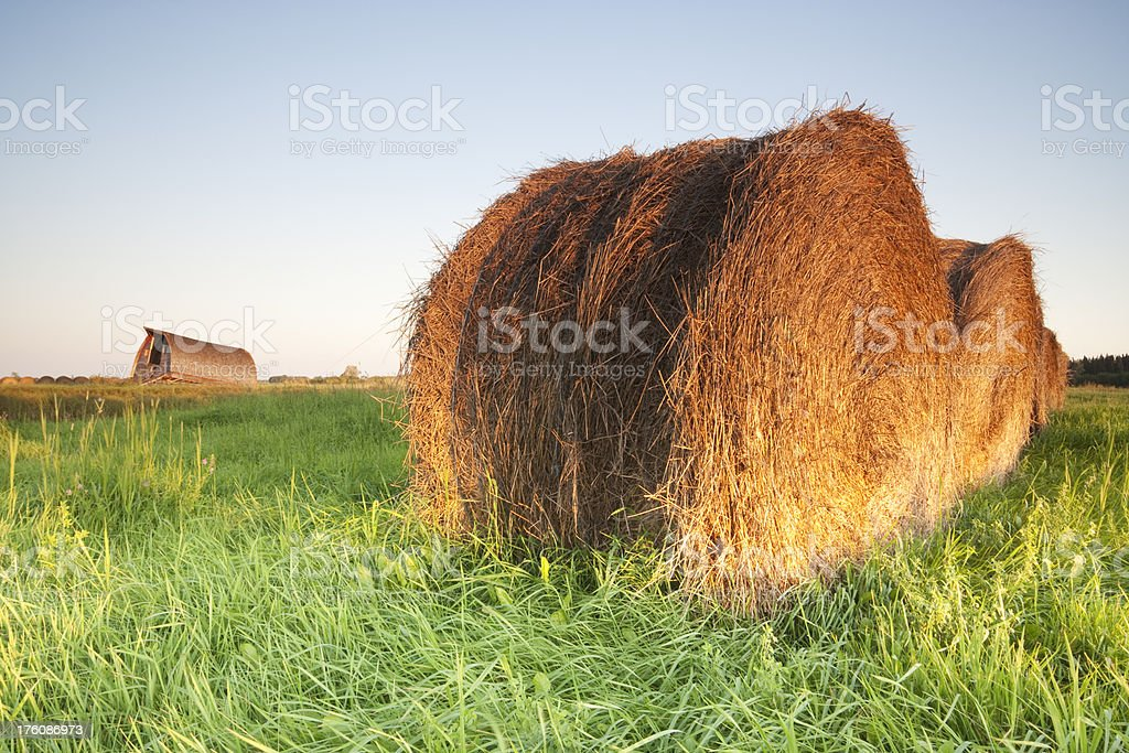 Manitoba Hay Bale royalty-free stock photo