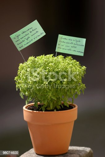 Manjerico Stock Photo & More Pictures of Basil