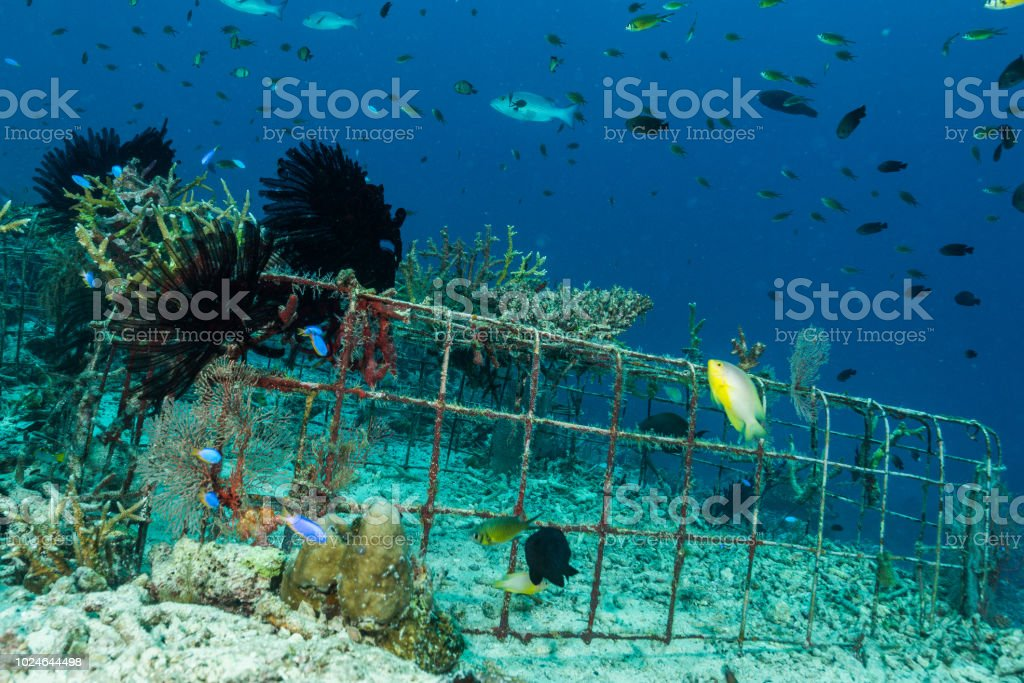 man-made artificial reef with metal struture and concrete to help marine life to recover destroyed area stock photo