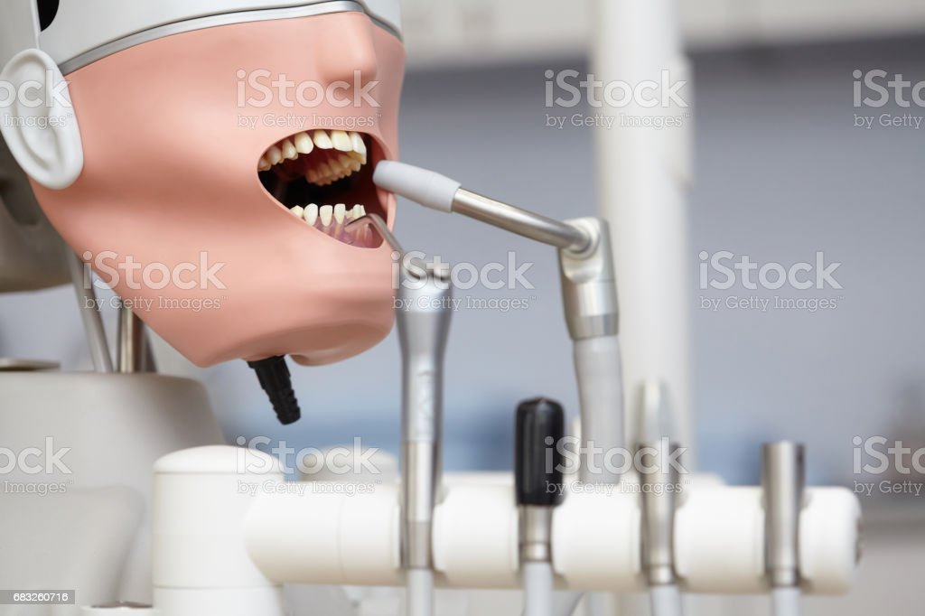 Mannequin or dummy for dentist students training in dental faculties royalty-free stock photo