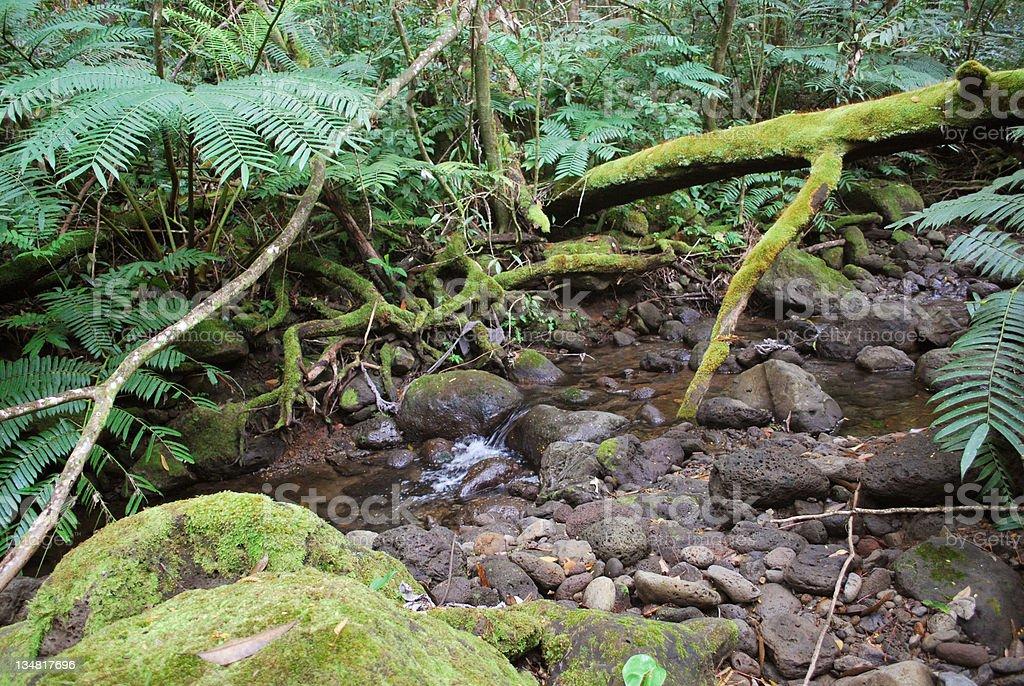 Manoa Valley stream, Oahu, Hawaii. stock photo