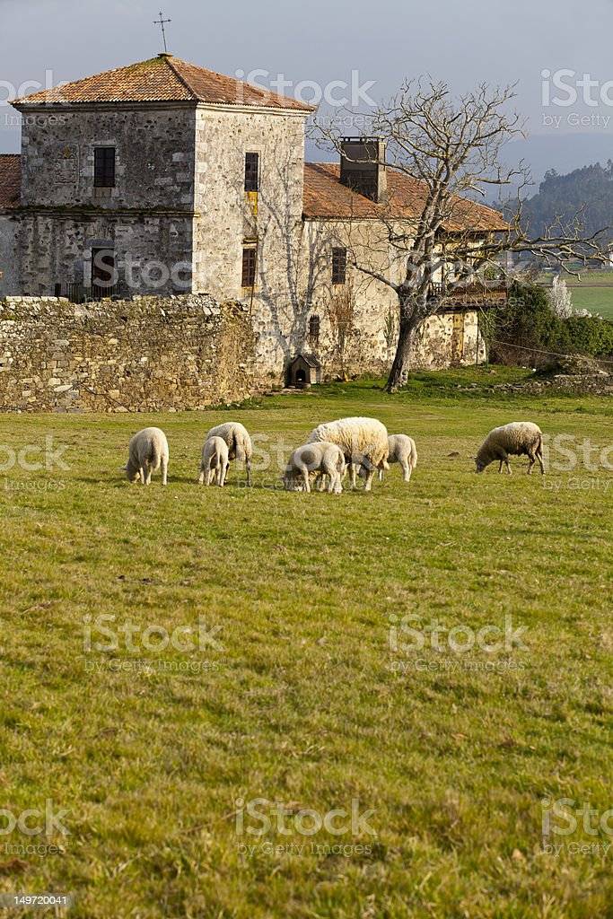 Manor and sheep royalty-free stock photo