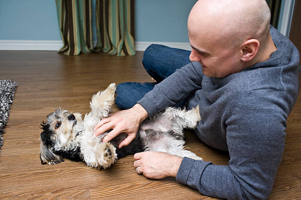 Man's Best Friend Puppy dog lying on his back while his owner gives him belly rubs rubbing stock pictures, royalty-free photos & images