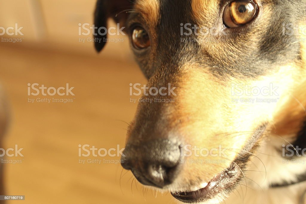 Man's Best Friend royalty-free stock photo