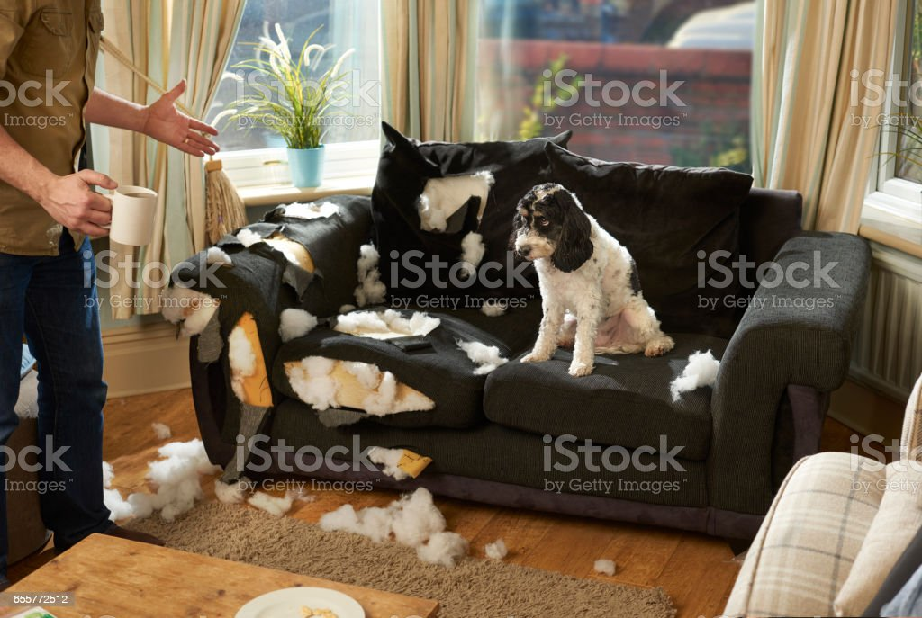man's best friend stock photo