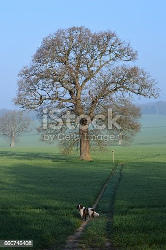 A dog waits for his master on a country public footpath in rural West Sussex, United Kingdom.