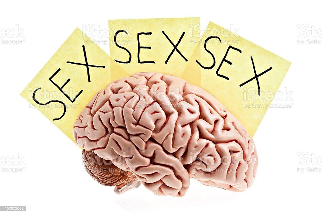 man's brain. royalty-free stock photo