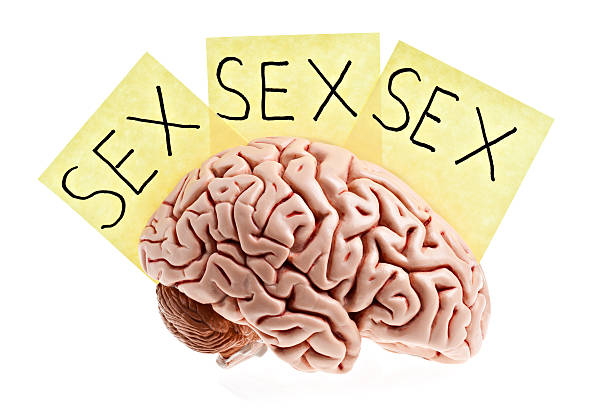 man's brain. stock photo