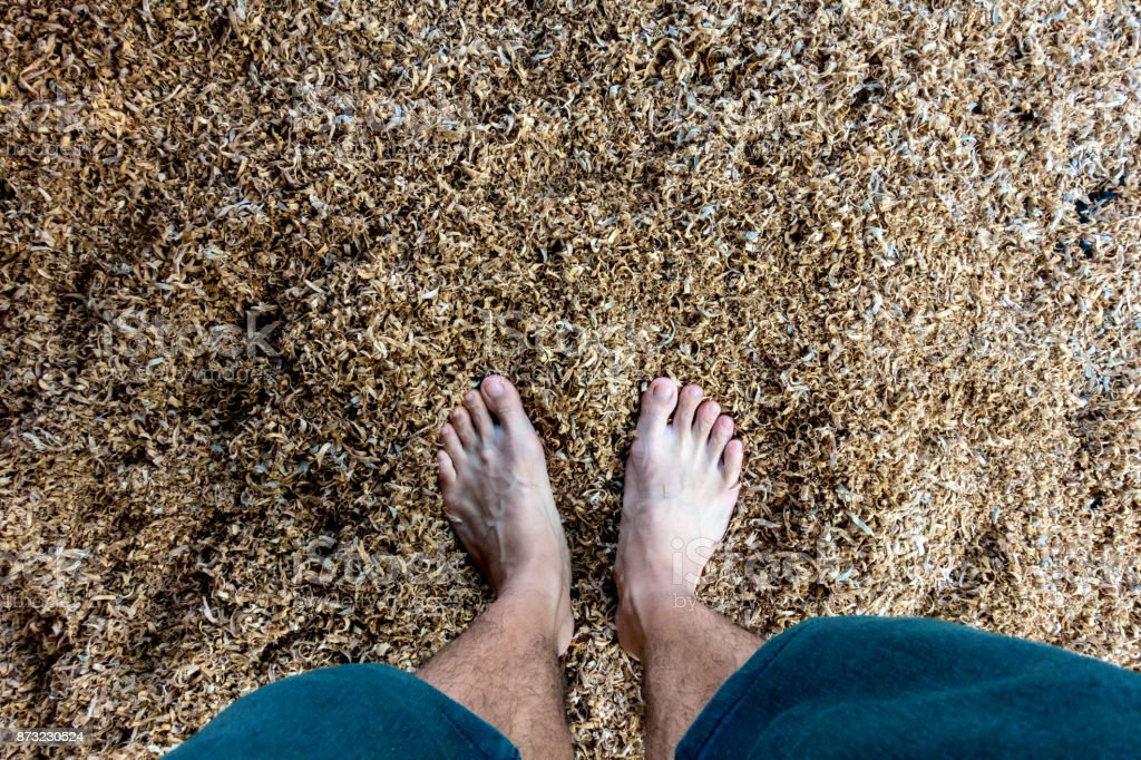 man's feet on sawdust or wood chips from sawmills stock photo