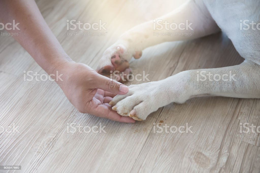 man's hand and dog's leg stock photo