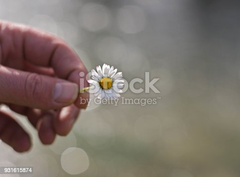 istock Man`s hand giving wild daisy chamomile flower with love. beautiful background, romance, feelings 931615874