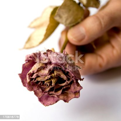 A man's hand presenting a dead rose. How romantic.More roses: