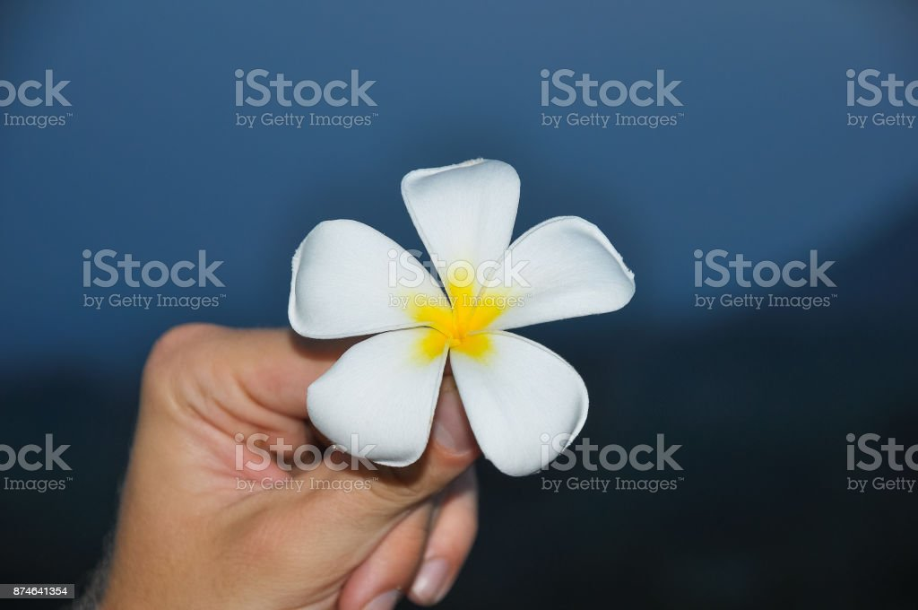Man's hand holding a white flower on the abstract background stock photo