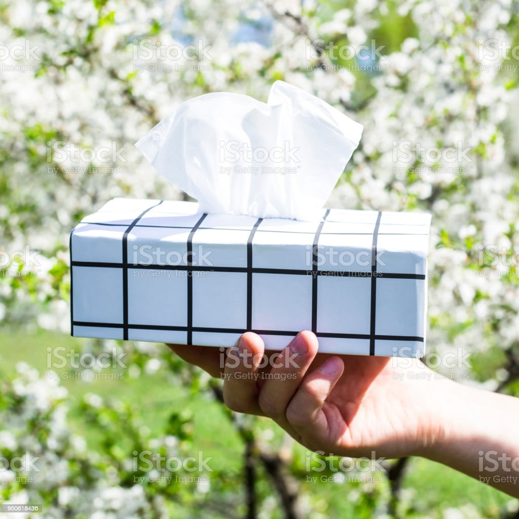 A man's hand holds a black and white box with napkins against the blossoming spring tree. Allergy to blooming concept stock photo