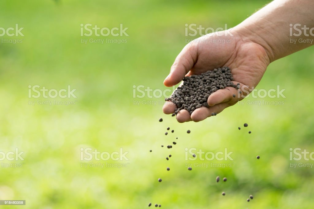 Man's hand is sowing fertilizer. Important steps to take care of plants. stock photo