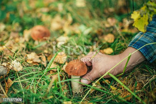 Man searching mushrooms in autumn forest