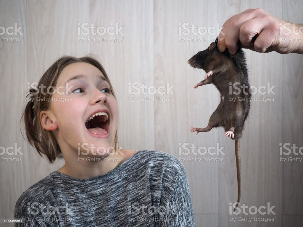 A man's hand shows a rat to a girl stock photo