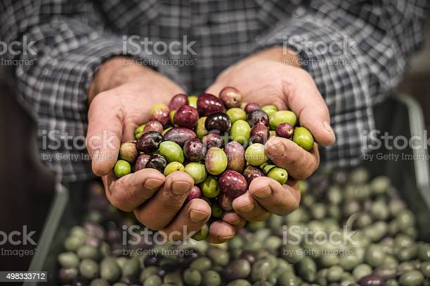 Mans hands holding a handful of olives picture id498333712?b=1&k=6&m=498333712&s=612x612&h=qwp r65wvw7uxz0zwcil klo k5ttmccumamv2xmc14=