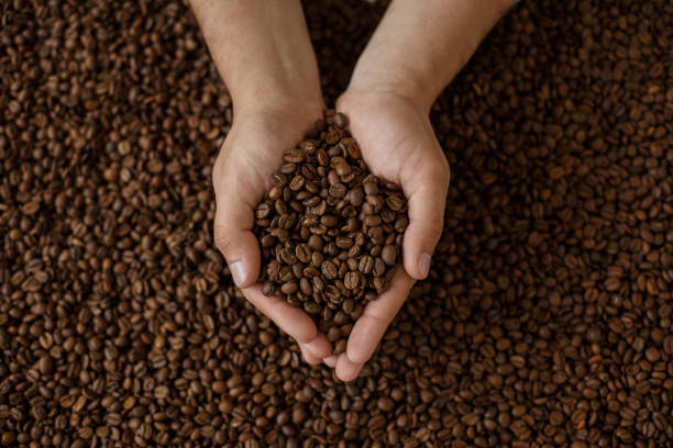 man's hands holding coffee beans - coffee farmer foto e immagini stock