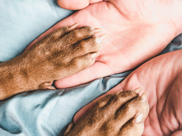 Mans hands holding paws of a young puppy picture id1203805836?b=1&k=6&m=1203805836&s=612x612&w=0&h=nwgx03mbuim68n0kruozrt1mxu4k6mjb bhepcpkujc=