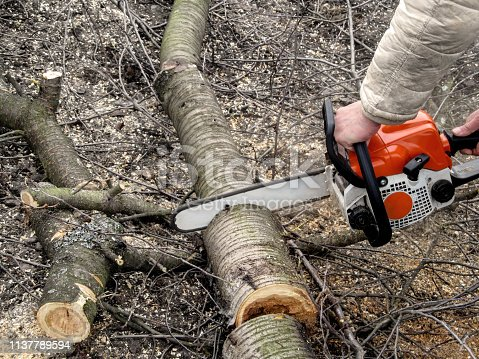 istock Man's hands sawing a cherry tree with chainsaw 1137789594