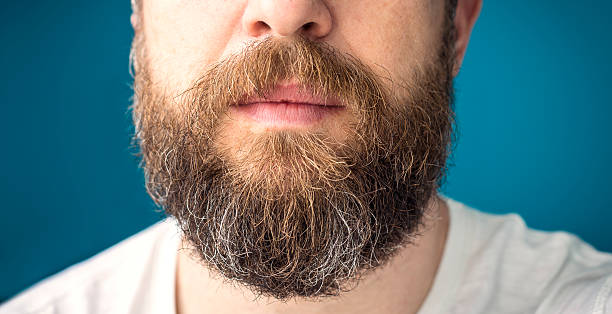 Man's long beard with brown and gray hairs stock photo