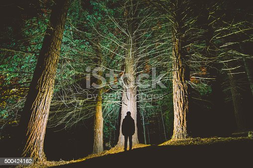 The silhouette of a young man appears in the middle of a redwood forest.