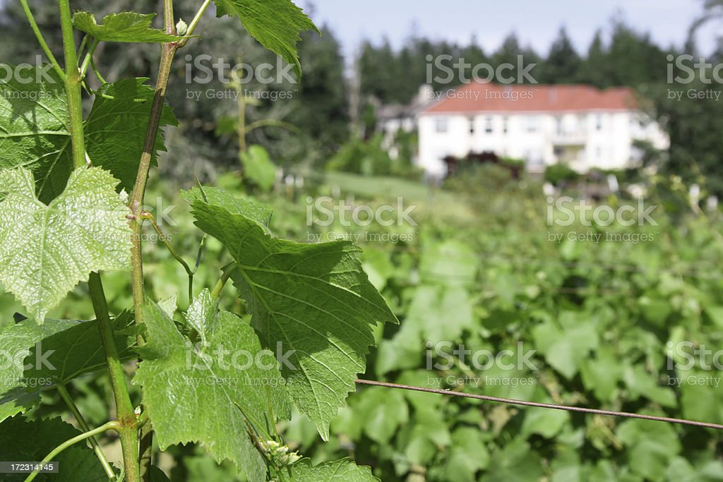 Mansion in a vineyard royalty-free stock photo