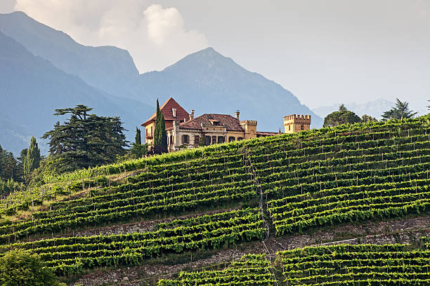 Mansion in den vineyards – Foto
