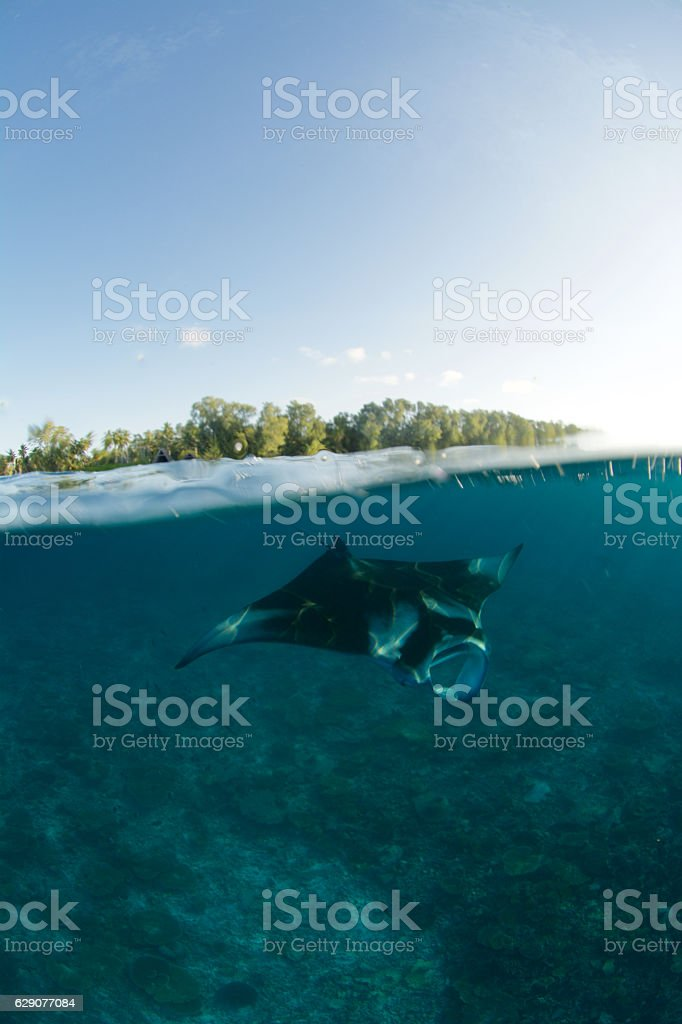manta island split level stock photo