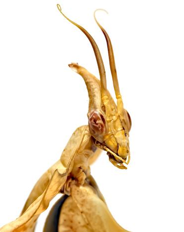 green grasshopper isolated on white
