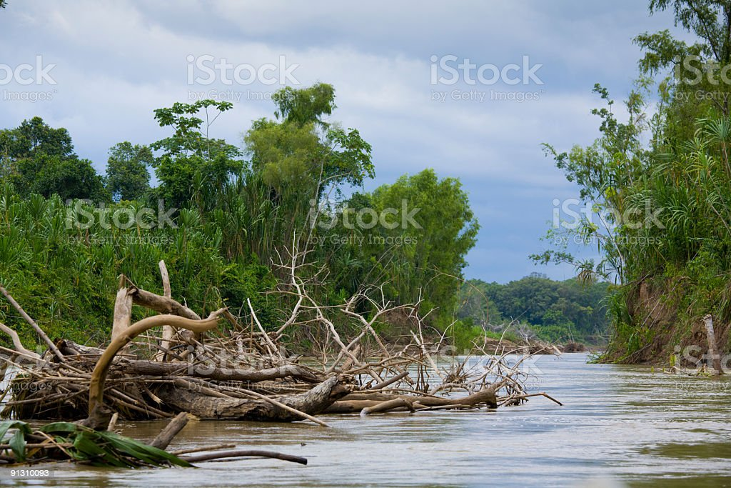 Manu River stock photo