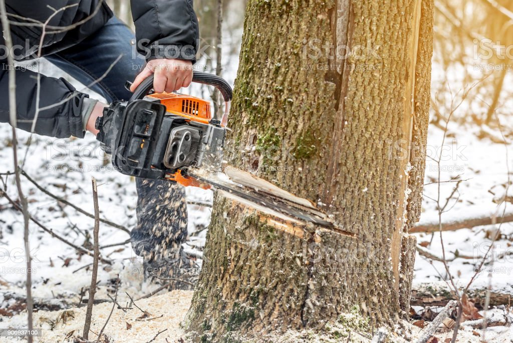Manual chainsaw. Man hands, saws a tree in the woods in winter at...