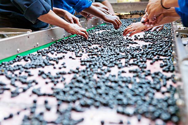 bauarbeiter hand manuelle sortierung trauben auf dem weingut - keller organisieren stock-fotos und bilder