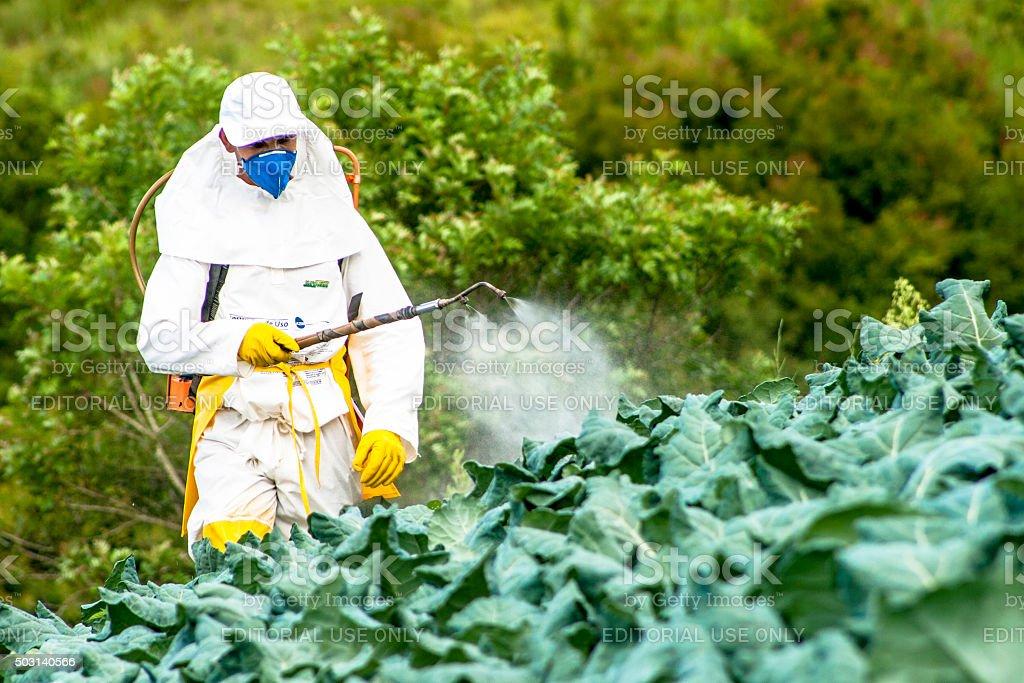 manual pesticide sprayer Capao Bonito, Sao Paulo, Brazil, December 18, 2009. Farmer with manual pesticide sprayer on cabbage field in Sao Paulo state Adult Stock Photo