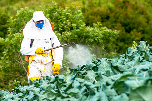 manual pesticide sprayer Capao Bonito, Sao Paulo, Brazil, December 18, 2009. Farmer with manual pesticide sprayer on cabbage field in Sao Paulo state crop sprayer stock pictures, royalty-free photos & images