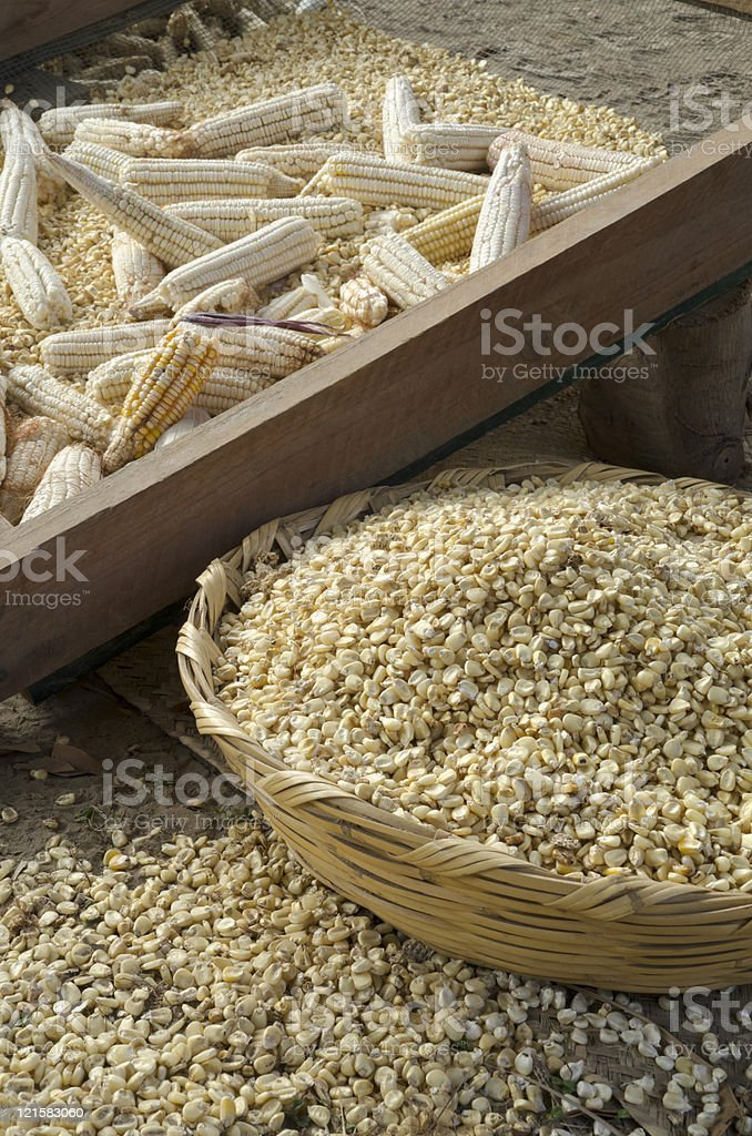 Manual Thresh Corn stock photo