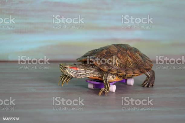 Manual turtle is riding a skateboard picture id838222736?b=1&k=6&m=838222736&s=612x612&h=cbeoawaszz1wdtruy53u ioha0mj6gwizfzmw8dd1wi=
