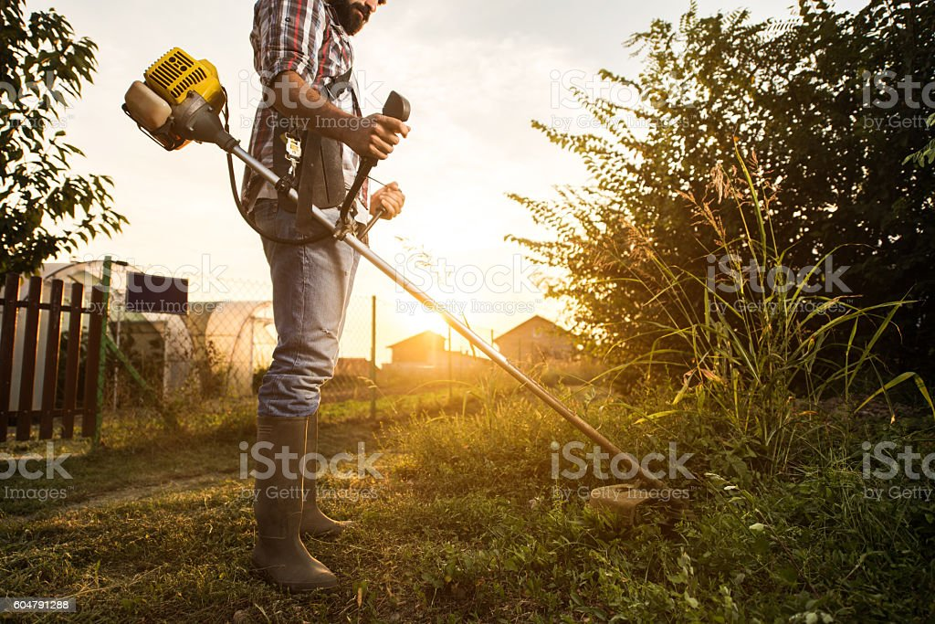 Manual worker cutting grass with weed trimmer at sunset. stock photo