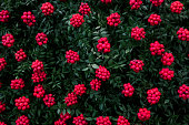 istock Manufacturer of Christmas plant decor. Christmas wreath for the holiday. The new year celebration. Top view 1077501340