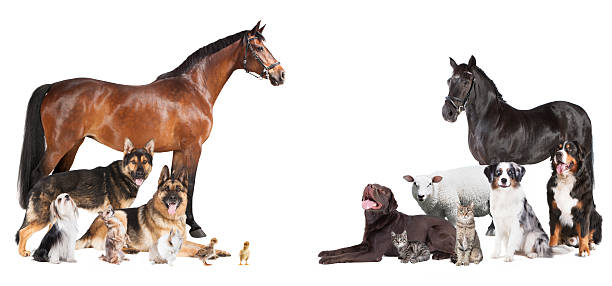 many animals Collage stock photo