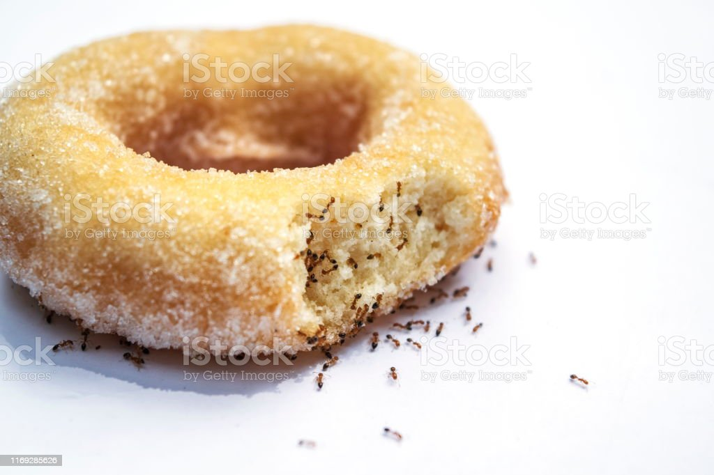 Many ants and donuts on a white background. Many ants and donuts on a white background. Advertisement Stock Photo