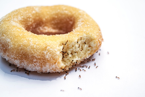 Many Ants And Donuts On A White Background Stock Photo - Download Image Now