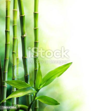 istock many bamboo stalks and light beam 186440954