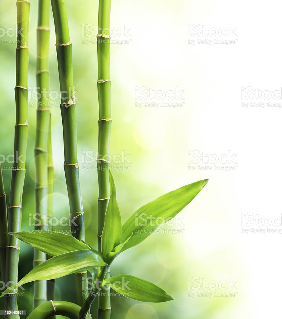 many bamboo stalks and light beam stock photo