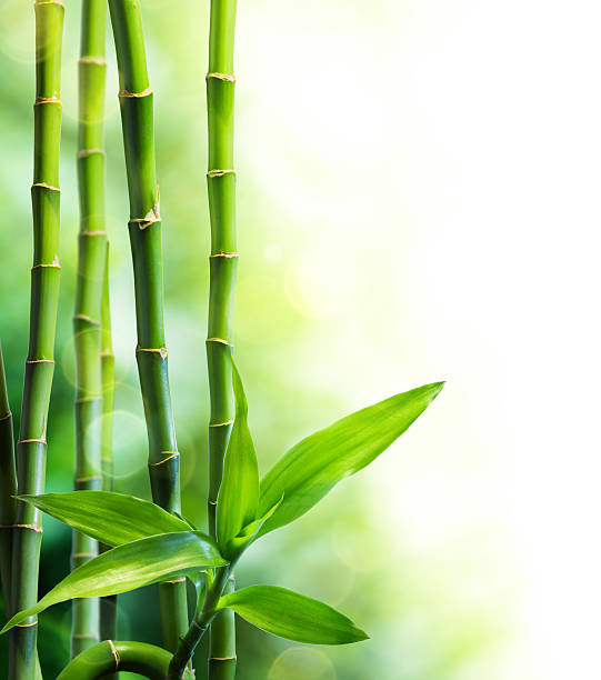 many bamboo stalks and light beam圖像檔