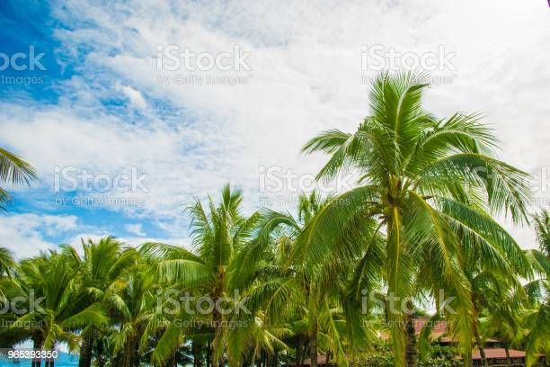 Wiele Pięknych Wysokich Palm Rosną W Pobliżu Palmy Aleya Tropikalna Wyspa I Piękne Drzewa Rosną Do Nieba Azja - zdjęcia stockowe i więcej obrazów Azja