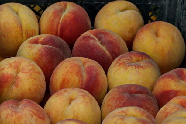 Many beautiful peach or Prunus persica advisable as a background Many beautiful peach or Prunus persica advisable as a background, Zavet, Bulgaria advisable stock pictures, royalty-free photos & images