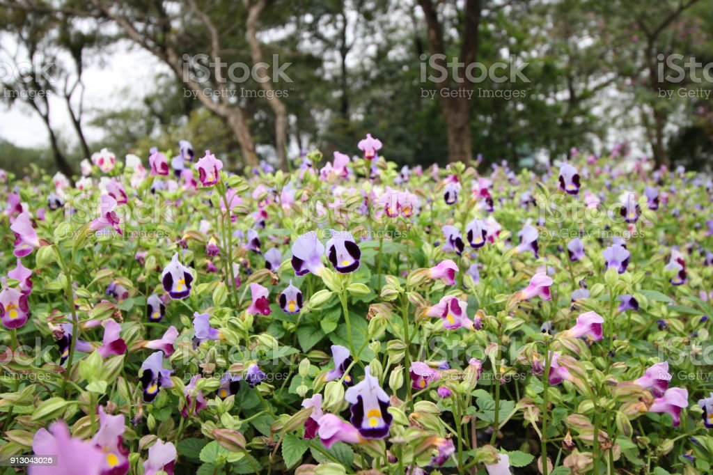 Many Beautiful Violet And White Flower And Soft Light In Gardent. Lovely  Purple Floral Plant